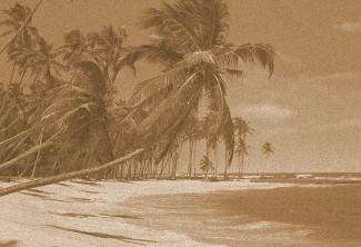 beach palm trees (3)